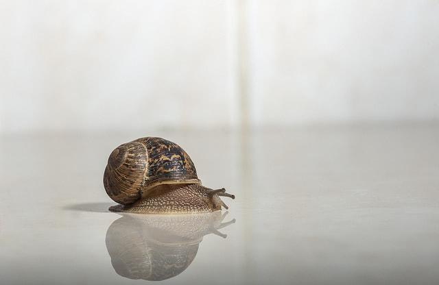 snail in skincare